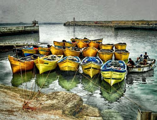 Barques jaunes