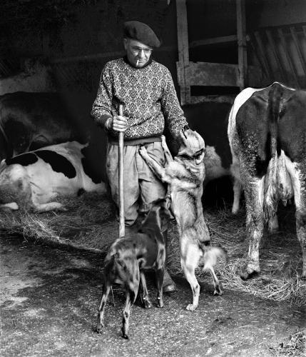 Alexis et ses chiens